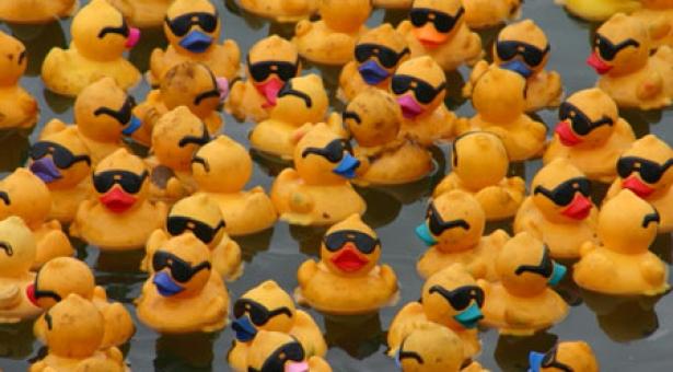 Une histoire de canards… Chatroulette.