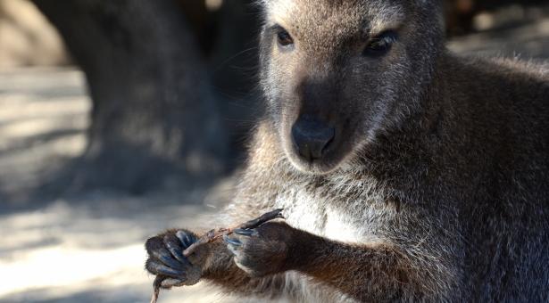 L'Australie… YEEPA !