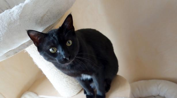 L'avis des gros chatons sur l'arbre à chat Natural Paradise XL !