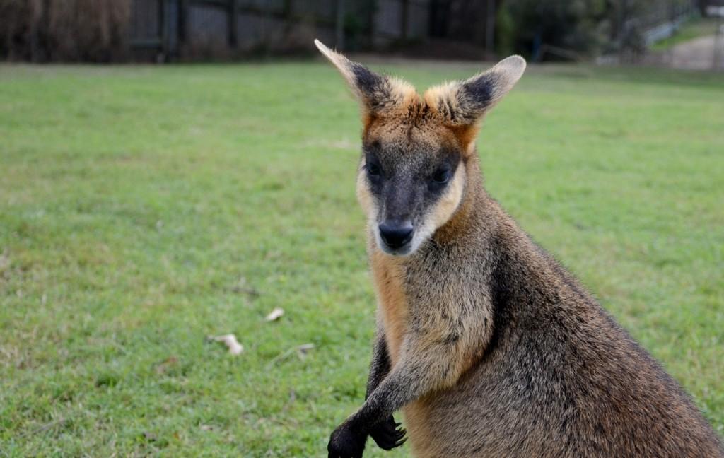 Site de rencontre en australie