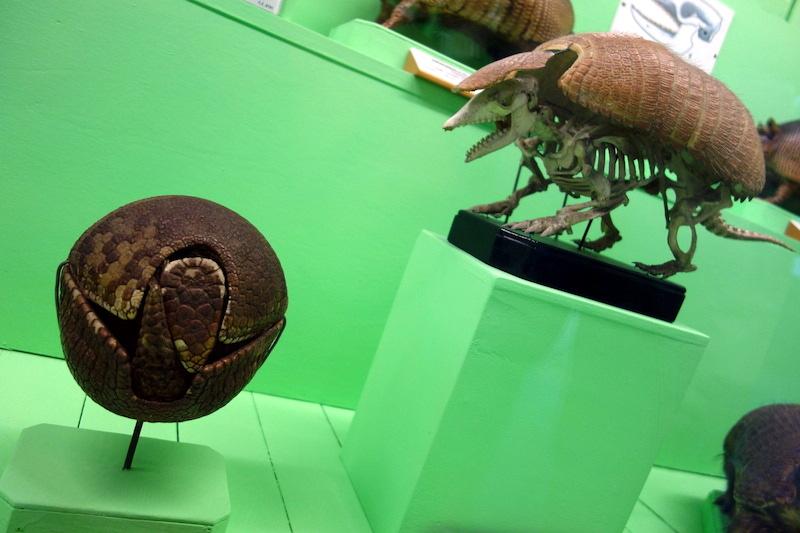 Museo civico di storia naturale Gênes