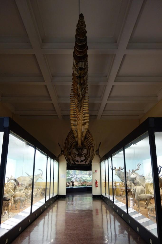 Museum histoire naturelle genes